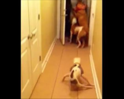 Paralyzed pup hears soldier Dad returning home, can't wait to surprise him