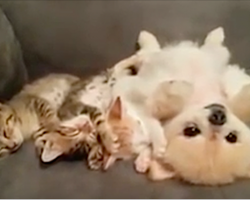 Puppy doesn't want to wake the kittens, so watch what she does