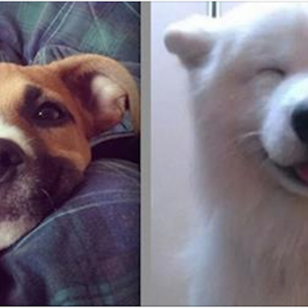 16 Happy Dogs Who Know How To Brighten Up A Room With A Smile