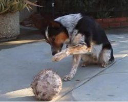 What This Genius Dog Can Do Is Awesome