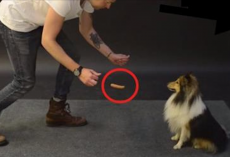 Magician Demonstrates A Levitating Hot Dog Trick To Several Dogs And Their Reactions Are Hilarious