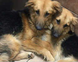 Dog best friends were dumped at a shelter, and they can't stop hugging each other