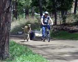 See the Great Dane running alongside the bike? Now watch as he ends up in the back