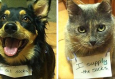 "20 Adorable But Naughty Pet ""Criminal"" Duos"