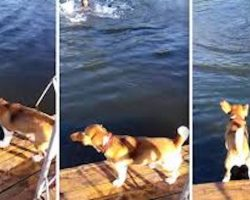 Beagle Thinks His Human is Drowning — Look What He Does!!!