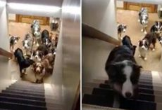 Clever Dogs Wait Patiently For Their Names To Be Called