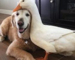 Duck and Dog Are Each Other's Best Friend