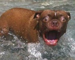 32 Goofball Dogs That Don't Know If They Like Water Or Not. This Is Hilarious!