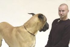 How Dogs React To Human Barking? The Reaction Is Pretty Priceless.