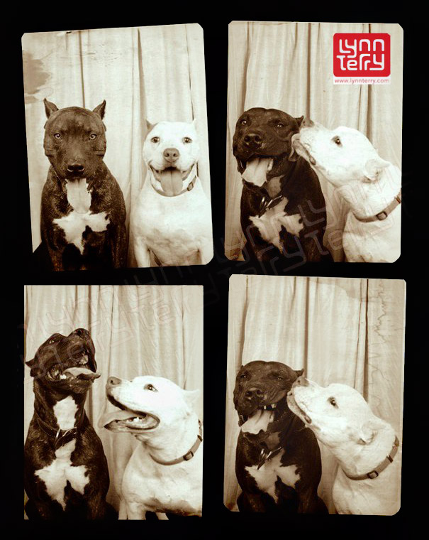 pit-bulls-photo-booth-cute-dogs-2