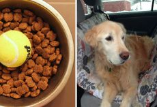 15 brilliant life hacks that every dog owner needs to know