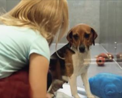 She bends down next to a dog in the shelter. The next part? Oh, my heart!