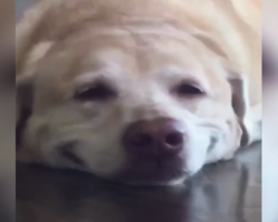 Dog Has The Cutest Reaction When Mom Asks Him To Smile