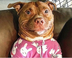 Rescued Pit Bull's Goofy Grin Wins Him His Mom's Heart And Fans Across The Globe