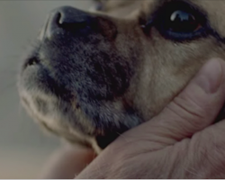 This 1 minute video needs to be seen by all dog lovers