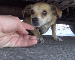 Scared dog hiding under car about to have emotional reunion with owner