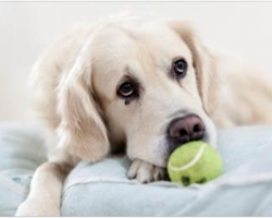 5 Ways You May Be Unintentionally Hurting Your Dog's Feelings