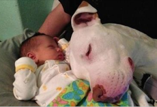 10+ dogs who have fallen in love with their little humans
