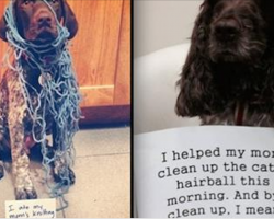 17 Naughty Dogs Who Know Just How To Help Mom