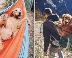 25 Dogs Who Love Nothing More Than Camping With Their Humans
