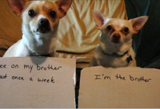 23 dogs being hilariously shamed for their crimes
