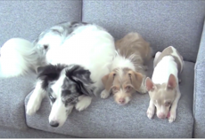 They may look like 3 normal dogs, but you haven't seen anything yet