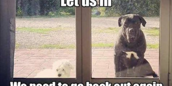 14 Things Dogs Do That Drive Pet Parents Nuts