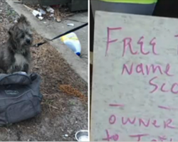 Two Women Find An Abandoned Dog Tied To A Pole – And A Heartbreaking Note Lying Beside Him