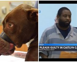 UPDATE: Man Who Abused Caitlyn The Dog Pleads Guilty