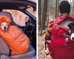 Photos Reveal That Camping With Dogs Is Not Only Fun It Is Inspiring Too