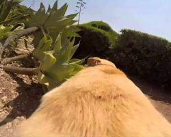 Dog's Passion For Diving And Swimming Is Brilliantly Captured In Hilarious Video