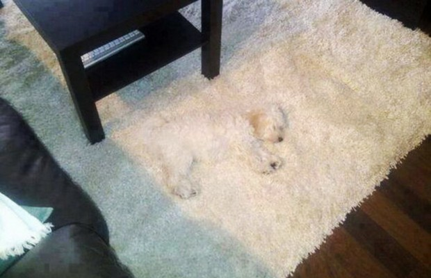 20 Dogs Who Think They Ve Found The