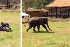 """Man """"attacks"""" a caretaker at elephant sanctuary (staged). Now watch an elephant come to the rescue"""