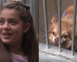 Girl sees an old, forgotten dog at the shelter. But then she walks outside to see a crowd waiting for her