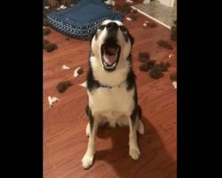 Hilariously expressive dog talks back to mom when confronted about the mess on the floor
