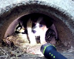 This Video About Abandoned Dogs Will Make You Rethink Humanity. Everyone Should See.