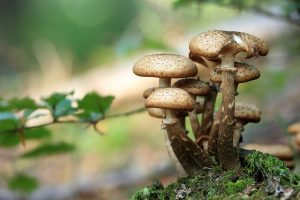 mushrooms-548360_1280