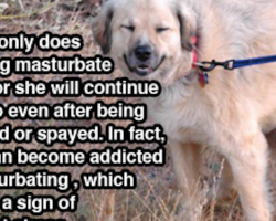 25 Canine Facts That Even The Biggest Dog Lovers Don't Know