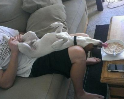 18 Dogs Who Are Proof That Life Is Far More Interesting With A Pet