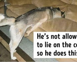 20 Well-Trained Dogs Who Understood the Rules in Their Own Way
