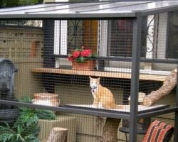 Cat owners everywhere are building 'catios' in their backyard. These photos prove the latest craze is real