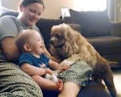 Baby Giggles Adorably At Cocker Spaniel Playing Fetch