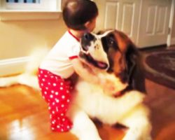 Baby Hugs Saint Bernard For The Very First Time