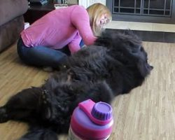 Mom's Rubbing Her BIG Dog's Belly, But You'll Want To See What Happens When She Stops!