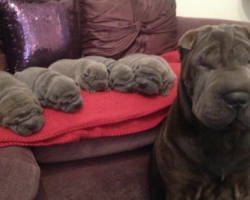 23 proud mama dogs and their insanely cute (and sometimes crazy) puppies