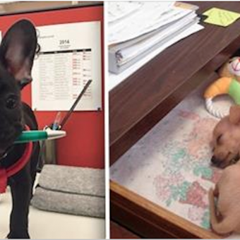 18 Of The Cutest Reasons Why You Want To Bring Your Dog To Work
