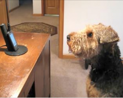 "Pup Misses Mommy And Calls Her, She Can't Stop Laughing At Words He ""Says"" To Her"