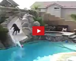 Playful Doberman Has Fun Playing In The Pool All On Her Own