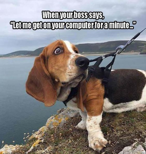 basset hound boss meme