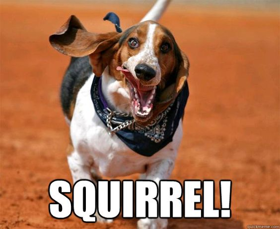basset hound run meme